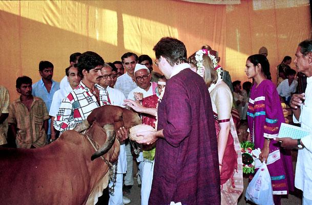 The Gandhian part of the wedding ceremony: blessing the cow, Savarkundla, 1994.