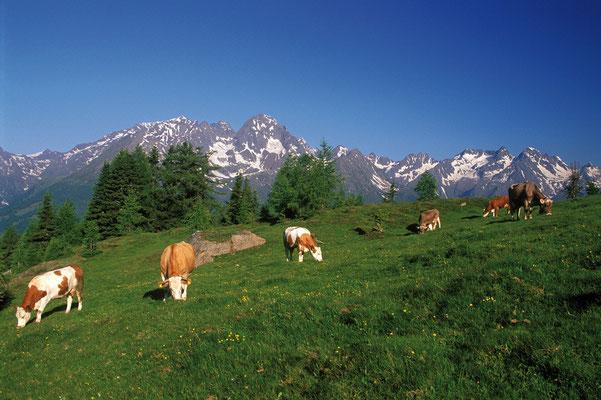 Landschaftsbild, (c) Zupanc, KW