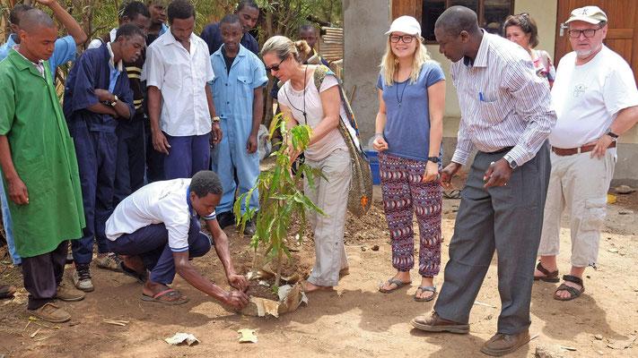 Am VTC wurden gemeinsam Bäumchen gepflanzt.