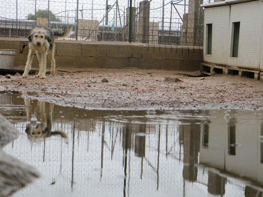 In manchen Gehegen hat das Wasser die üblichen Wege der Tiere abgeschnitten!