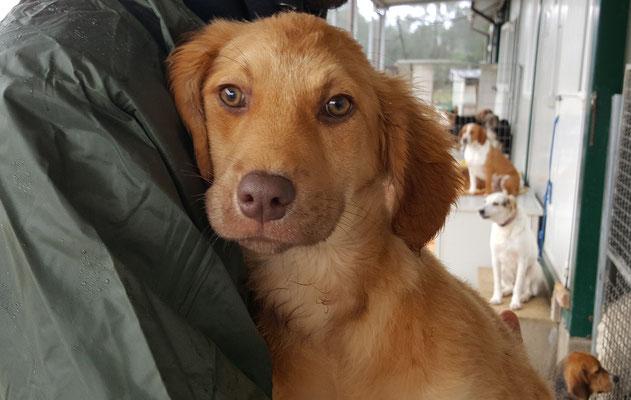 Fabia sardinienhunde e v for Argo fabiola