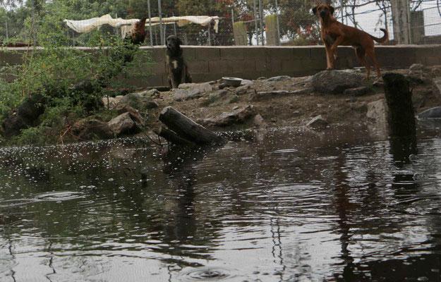 Manche Tiere wissen gar nicht recht wohin bei dem vielen Wasser.