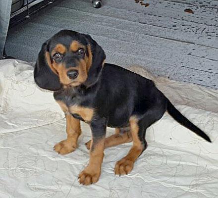 Elvin sardinienhunde e v for Argo fabiola