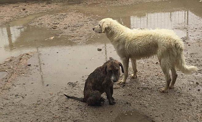 Kleine und kranke Hunde benötigen ganz dringend ein Dach über dem Kopf!
