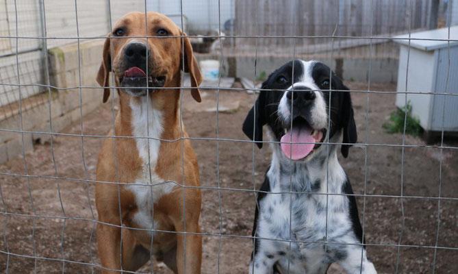 Simone sardinienhunde e v for Argo fabiola