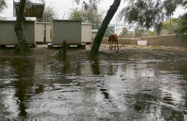 Das ist keine Idylle am Fluss, sondern ein überflutetes Gehege.