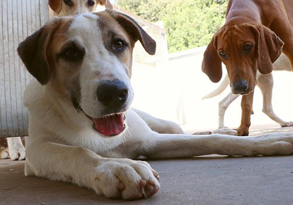 Moritz und rechts blickt Peter in Bild!