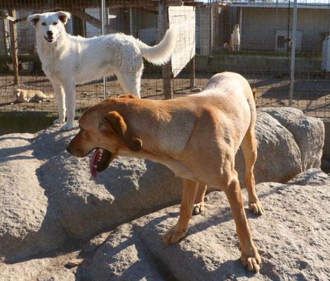 Romualda mit Trudi auf dem Stein im Gehege 60