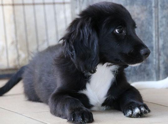Costatino sardinienhunde e v for Argo fabiola