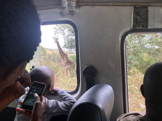 Arusha Nationalpark, die Begeisterung war groß