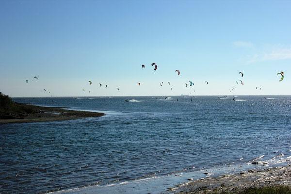 Viele Kitesurfer am Meer