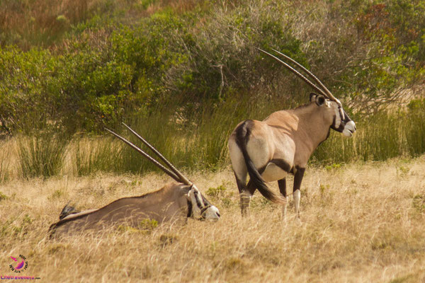 Safari Packliste Südafrika