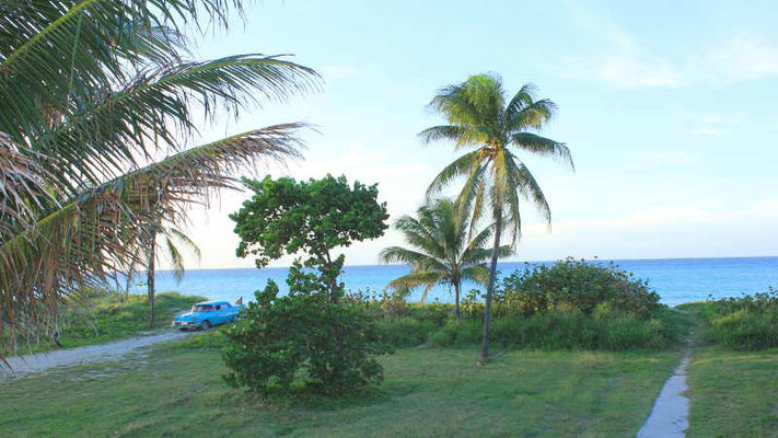 Palmen am Strand von Varadero