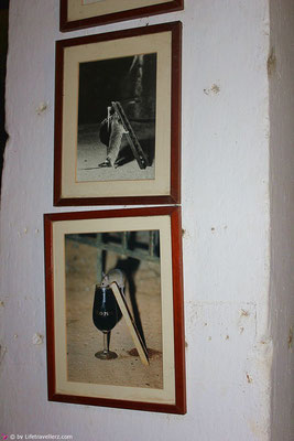 Mäuse trinken Sherry bei Tio Pepe in Andalusien