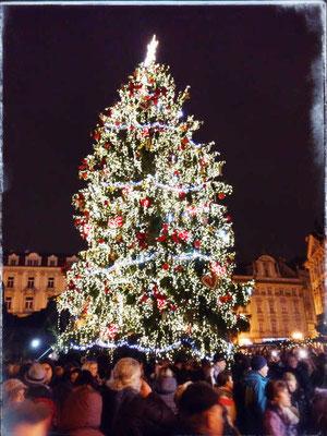 Christbaum am Prager Weihnachtsmarkt