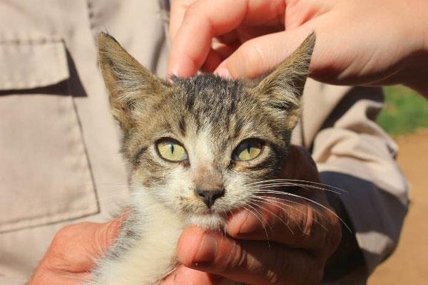 Katze in Vinales auf Kuba