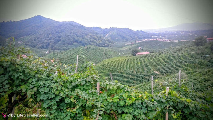 Weinberge in Valdobbiadene in Italien