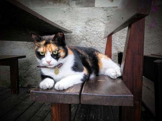 Grumpy Cat in der Toskana