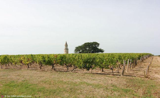 Weingarten Chateau Latour