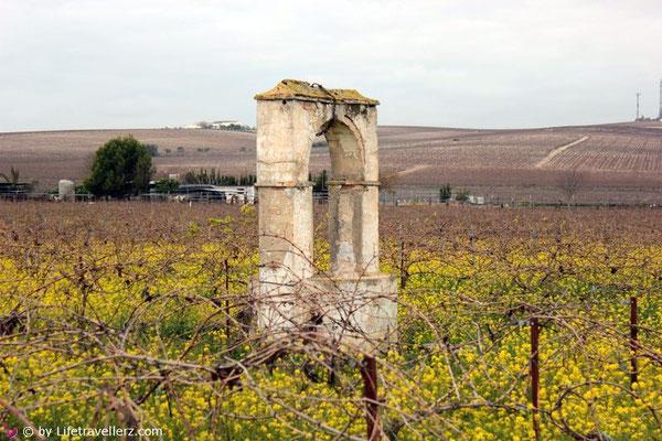 Die Weinberge von Jerez de la Frontera