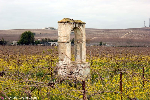Die Weinberge von Jerez de la Frontera in Andalusien