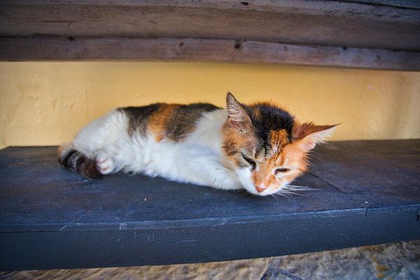 Katze auf Korfu