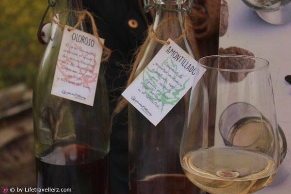 Verschiedene Sherry-Sorten in Andalusien