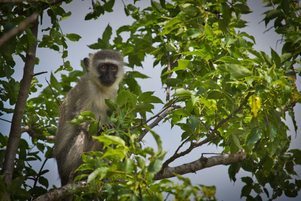 4x4 Roadtrip durch Südafrika - Saint Lucia iSimangaliso Wetland Park