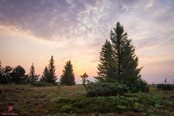 Wildcampen in Schweden - Vom Nordkap nach Österreich