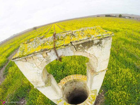 Der Brunnen zwischen Weinreben