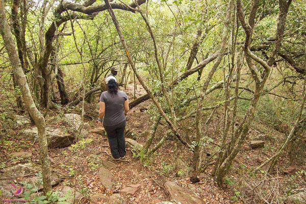 Bushwalk im H12 Leshiba Wilderness