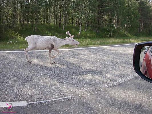 Roadtrip ans Nordkap - Zwischenstop beim Santa Claus Village