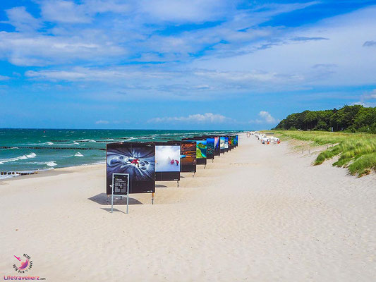 Fotosafari in Zingst