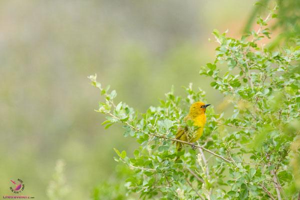 Natur im H12 Leshiba Wilderness