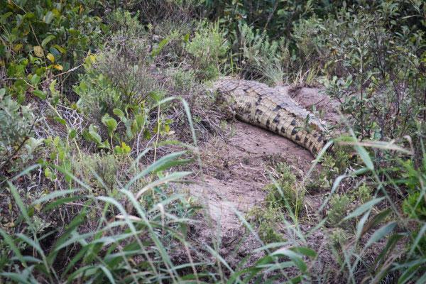 4x4 Roadtrip durch Südafrika - Saint Lucia