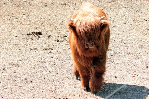 Tierisch unterwegs im Burgenland