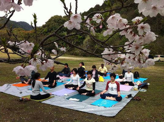 桜がちょうど満開!