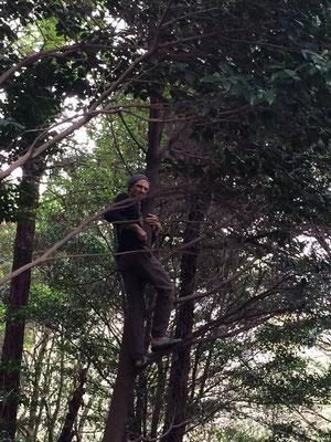 木を見ると登りたくなるSteve。