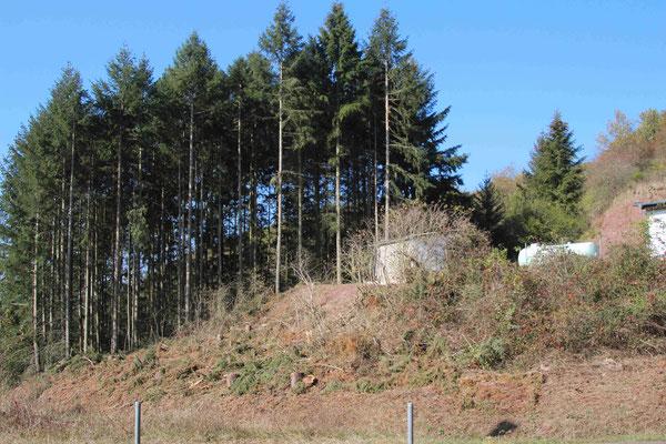 Ansicht Hang am Sportheim nach Baumfällung