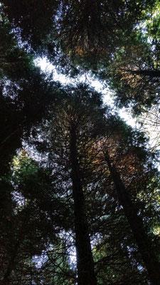chemin de lumière canopée © Laetitia Rousseau
