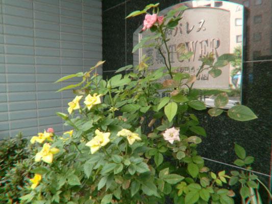 玄関入口のお花@菱和パレス高輪TOWER管理組合