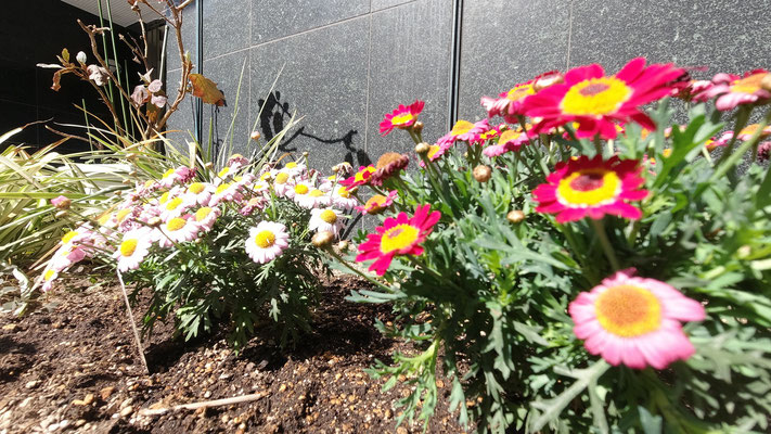 花壇のお花@菱和パレス高輪TOWER管理組合ブログ