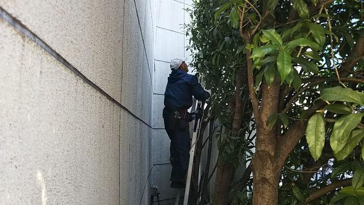 植木の剪定@菱和パレス高輪TOWER管理組合ブログ