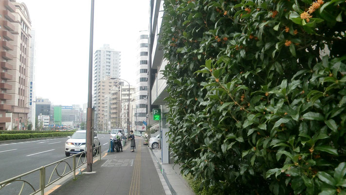 金木犀(キンモクセイ)@菱和パレス高輪TOWER/株式会社クレアスコミュニティー
