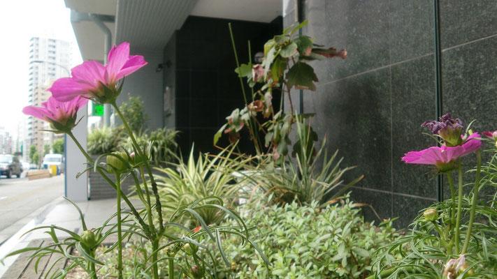 コスモス@菱和パレス高輪TOWER管理組合ブログ
