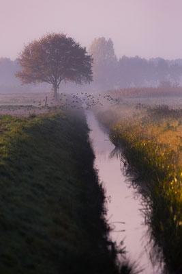 Warmser Moor