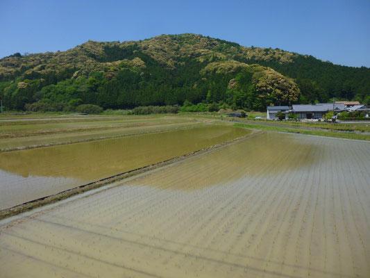 rizières en eau