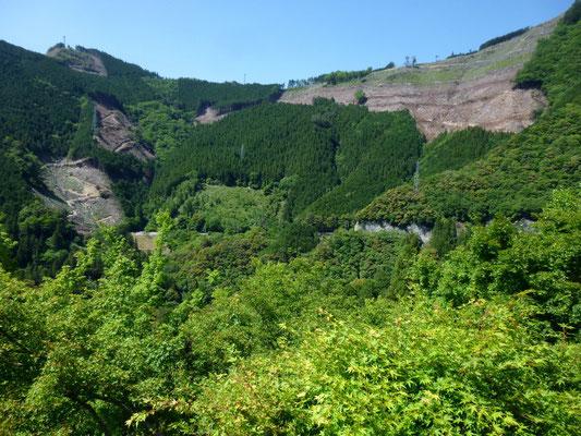 exploitations forestières