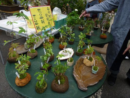jardins suchis