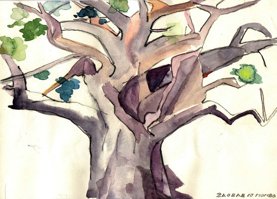 Baobab at mombo